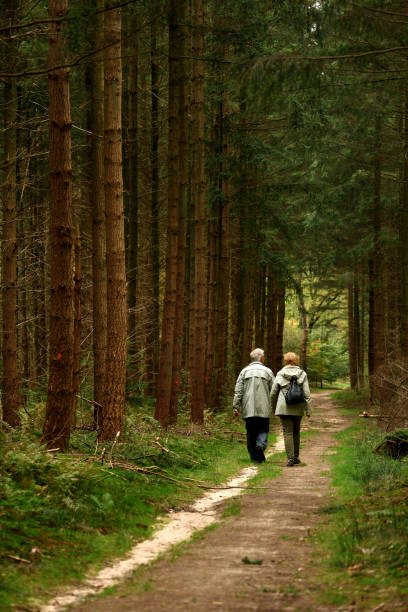 Rear view on Senior couple walking on footpath throught forest of fir trees stock photo