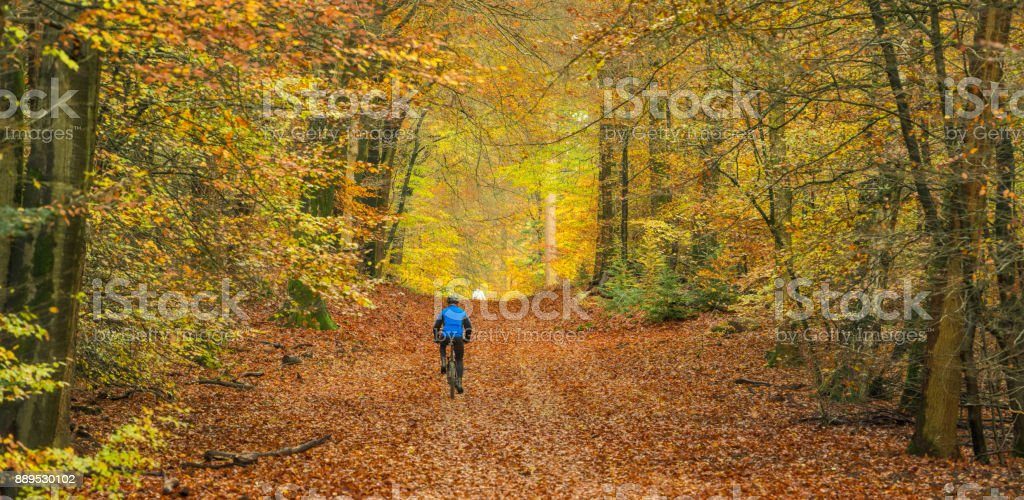Rear view on senior man cycling with mountain bike through autumn colored beech forest stock photo