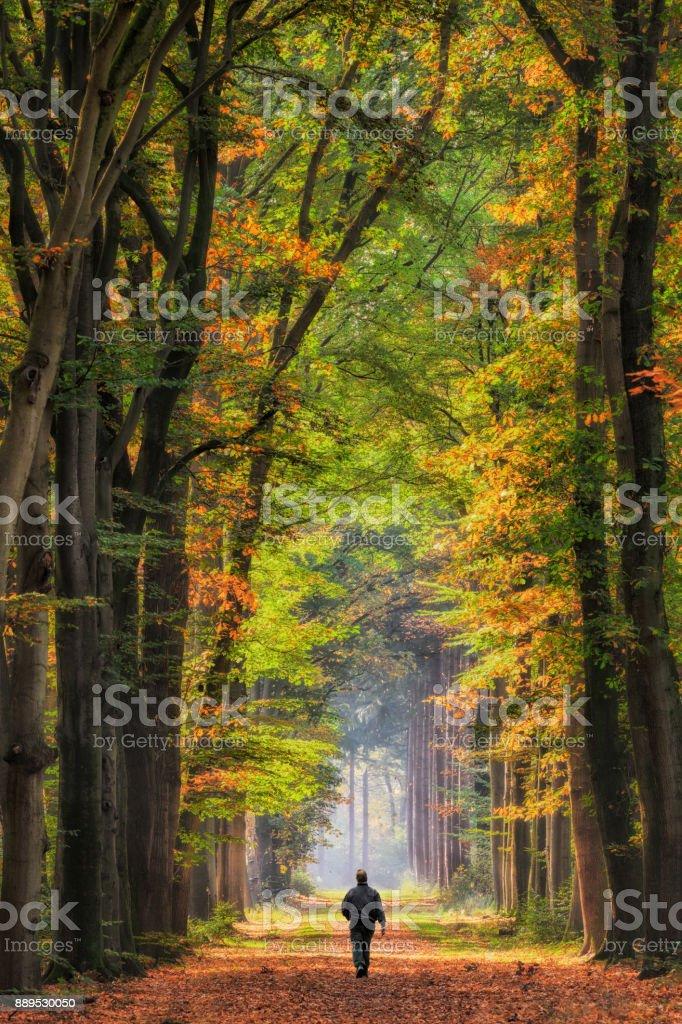 Rückansicht auf älteren Mann zu Fuß auf Bäumen gesäumt Fußweg durch Buchenwald ins Sonnenlicht – Foto
