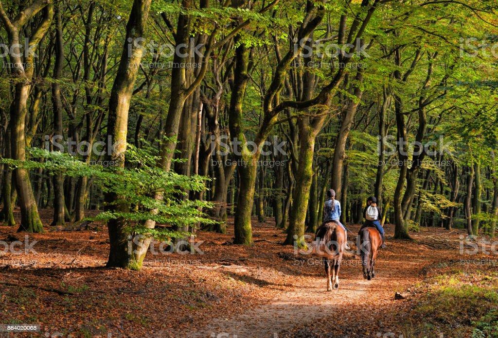 Rückansicht auf zwei Frauen Reiten durch farbige Buche Baum Herbstwald – Foto
