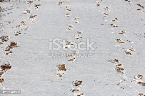 istock receding footprints of human feet in the snow 1210940565
