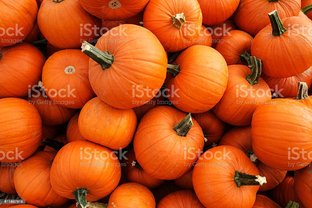 Recently harvested orange pumpkins in a random pile