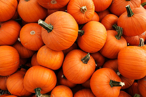Recently harvested orange pumpkins in a random pile stock photo
