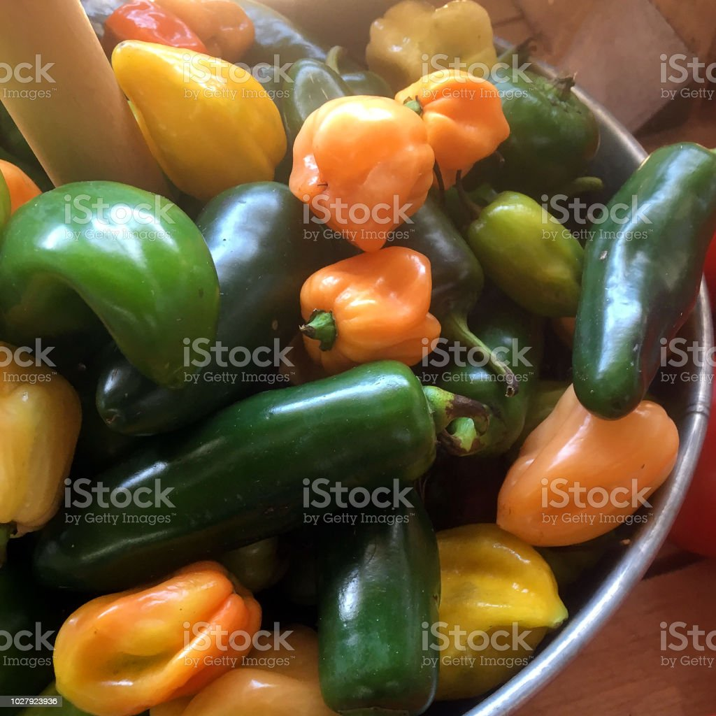 Recently harvested produce (hot peppers) stock photo