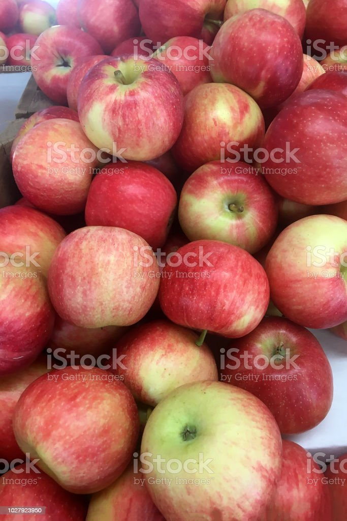 Recently harvested produce (red apples) stock photo