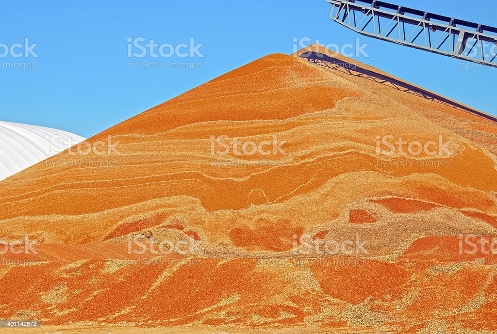 Recently harvested sorghum dumped on ground in Kansas royalty-free stock photo
