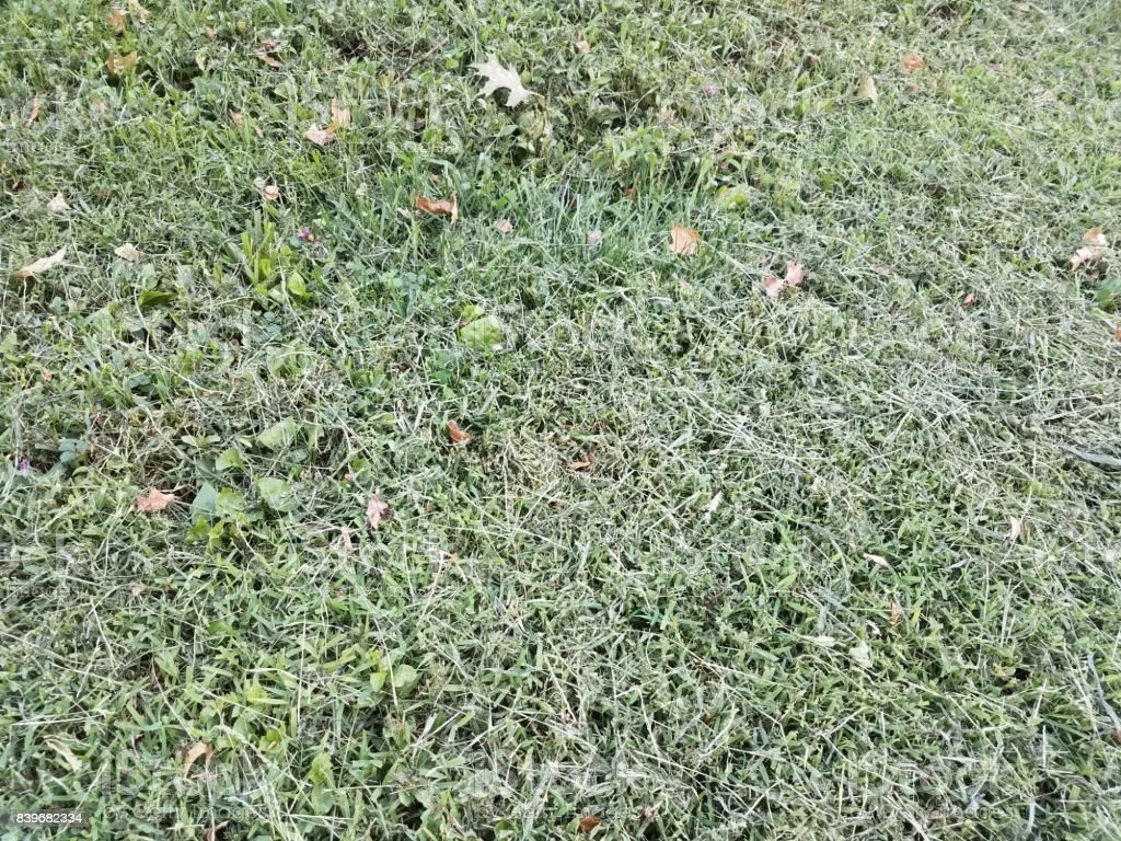 recently mowed grass stock photo