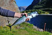 istock Recreational fishing in Norway 1285307505