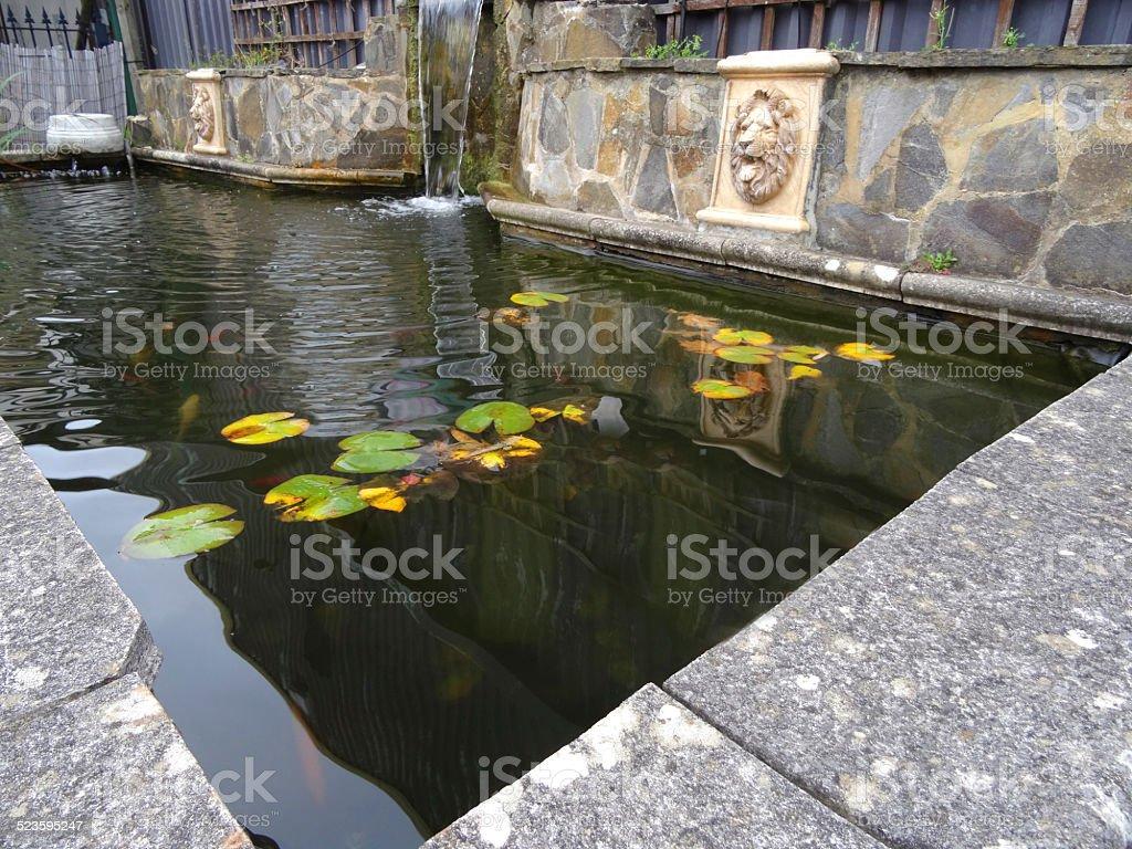 Rectangular Raised Formal Pond Image Water Lilies