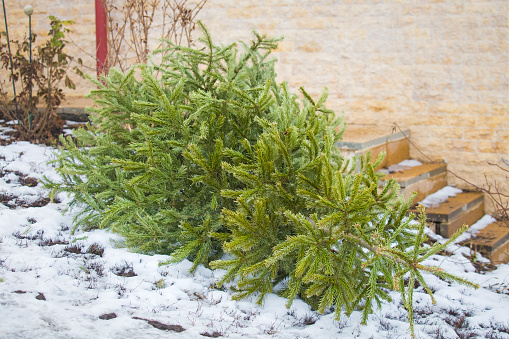 Recycle and dispose of Christmas tree