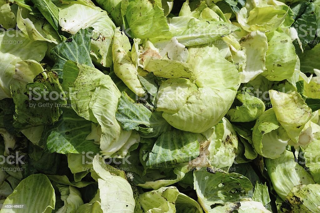 Recycle waste vegetable stock photo