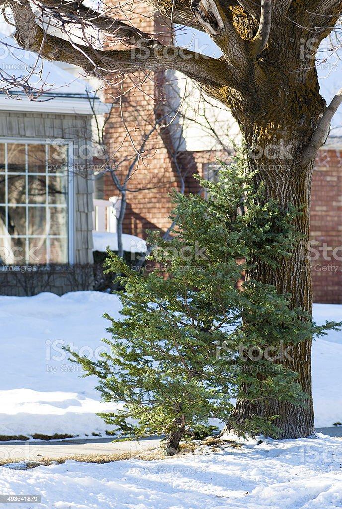 Recycled Christmas Tree royalty-free stock photo