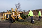 Warminster, Pennsylvania, USA - February 6, 2019: After the holidays, Christmas trees are ground up into mulch by a wood chipper by municipal workers.