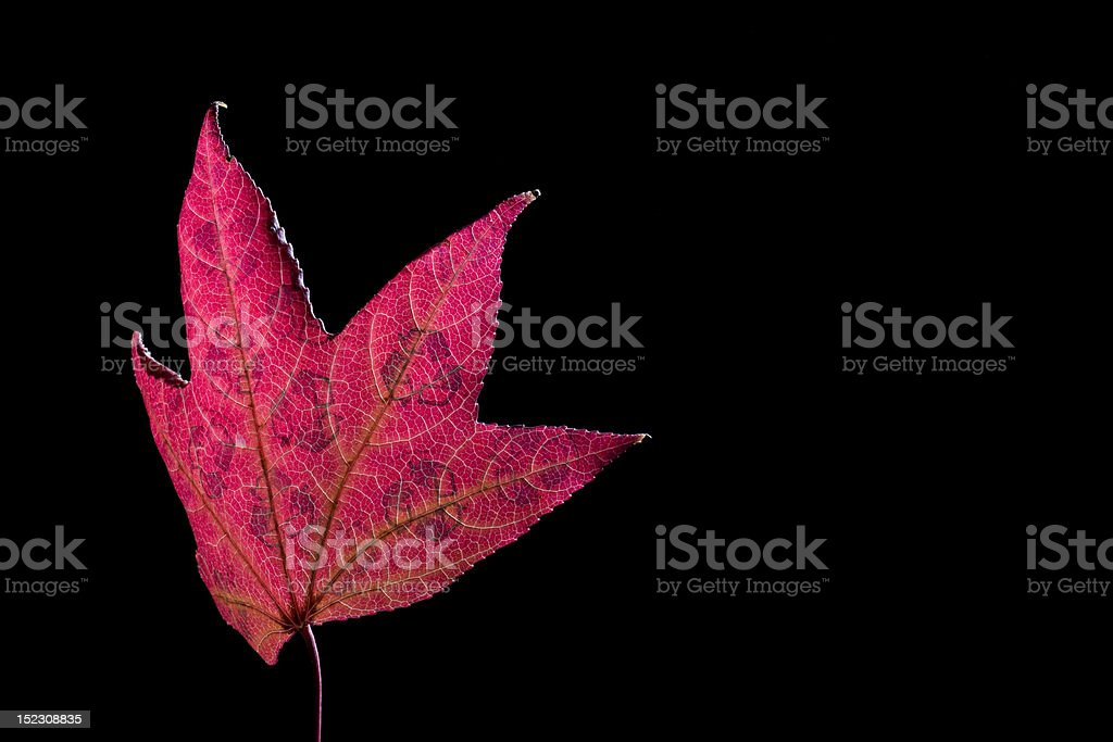 Recycling Leaves royalty-free stock photo