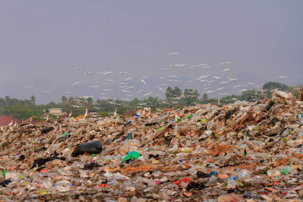 recycling, plastiktüte, treibhausgas, vogel, verschmutzung - windbeutel stock-fotos und bilder