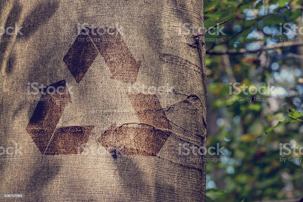 Recycling symbol on the trunk of a tree stock photo