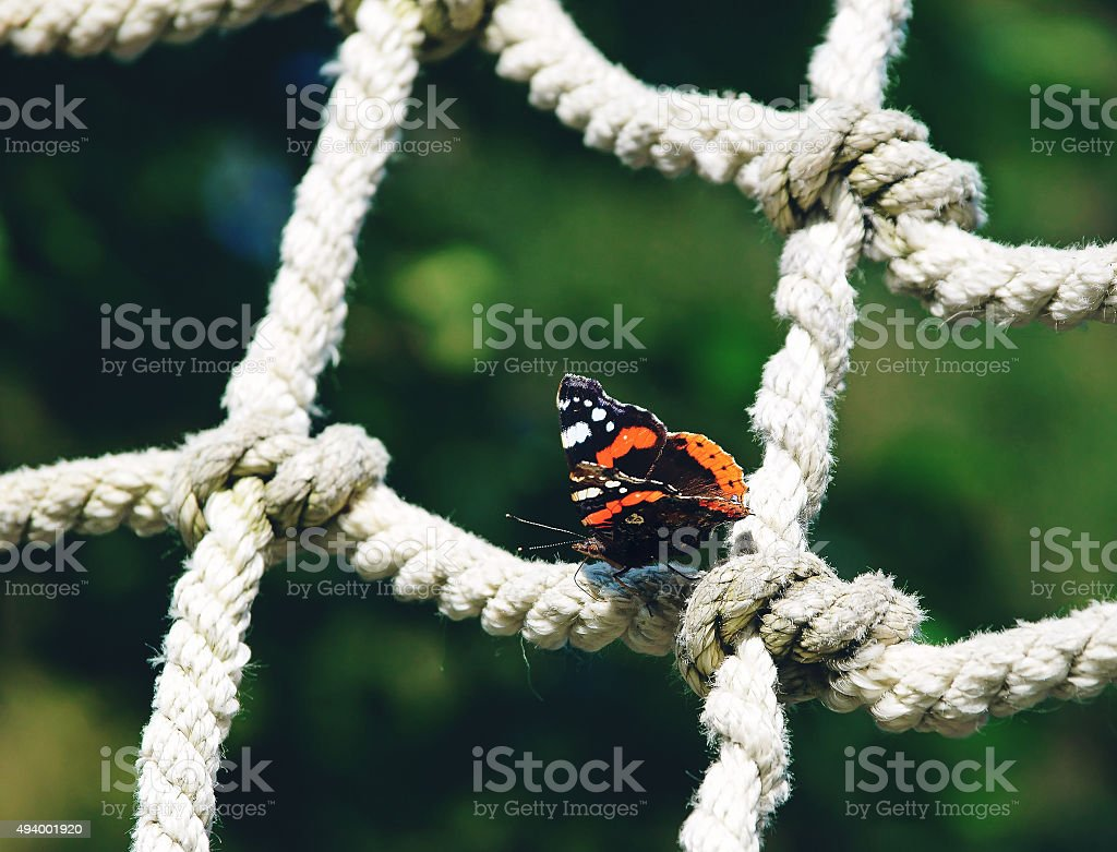 Red admiral butterfly sitting on a rope net stock photo