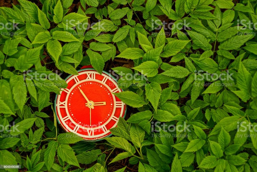 red alarm clock among green leaves stock photo