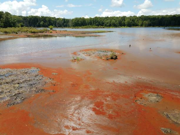 red algae and water and mud in a wetland area stock photo