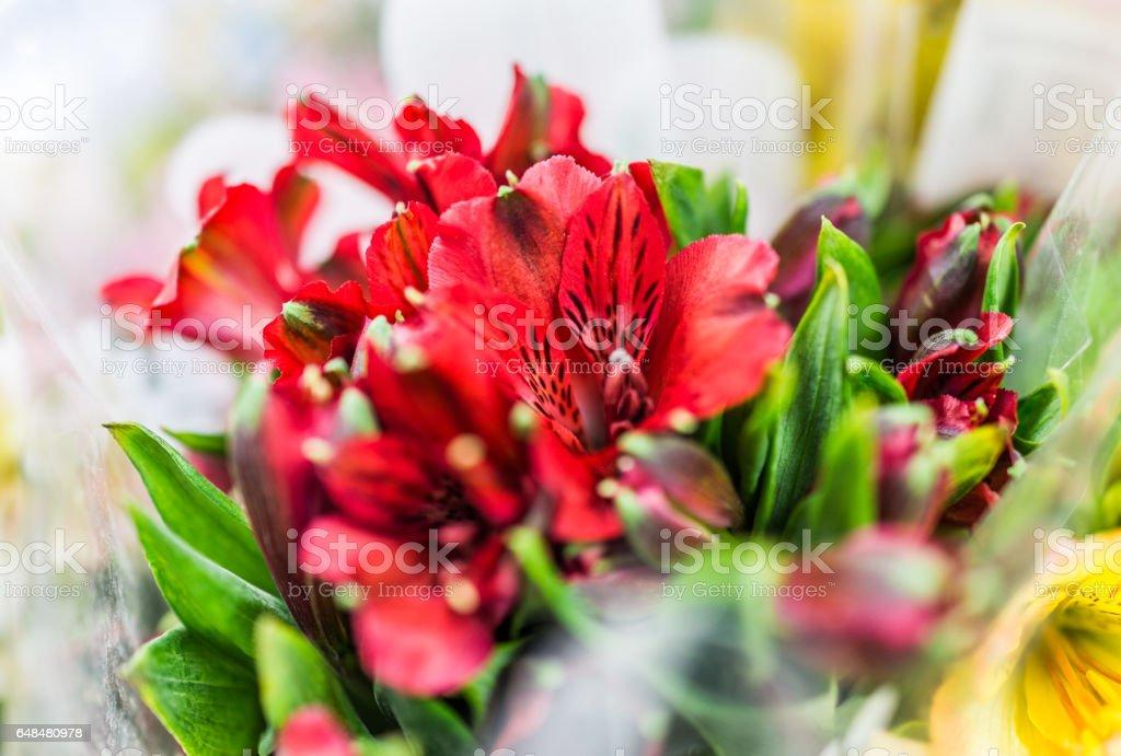 Red alstromeria flower bouquet macro closeup stock photo