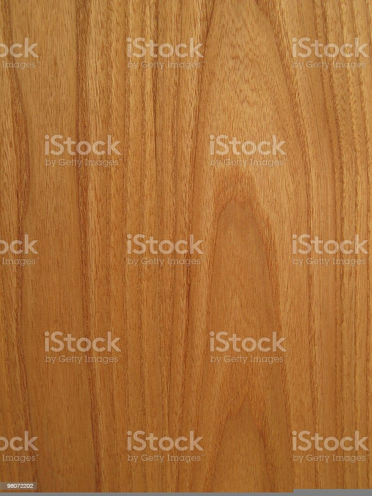 Red american elm royalty-free stock photo