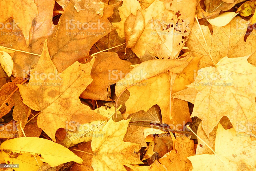 Red & Gold Leaves Mosaic royalty-free stock photo