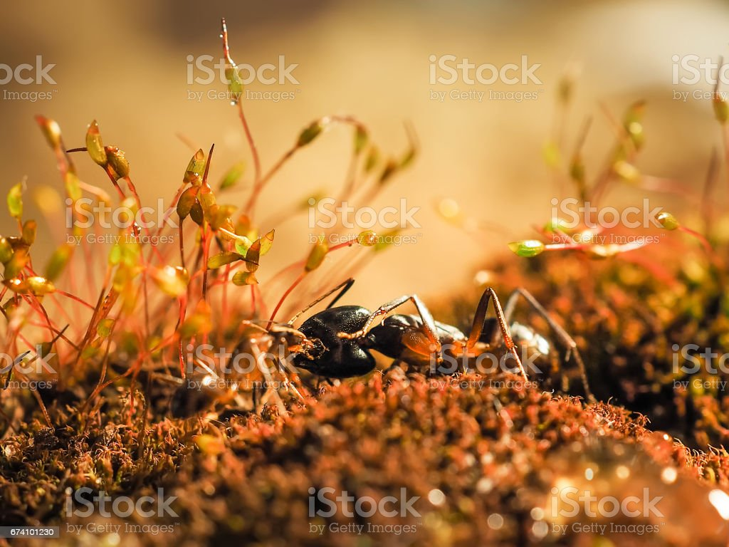 Red and black Ant was fighting on the leaves, Ant royalty-free stock photo