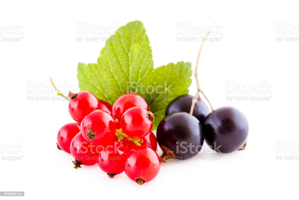 Red and black currants on white stock photo