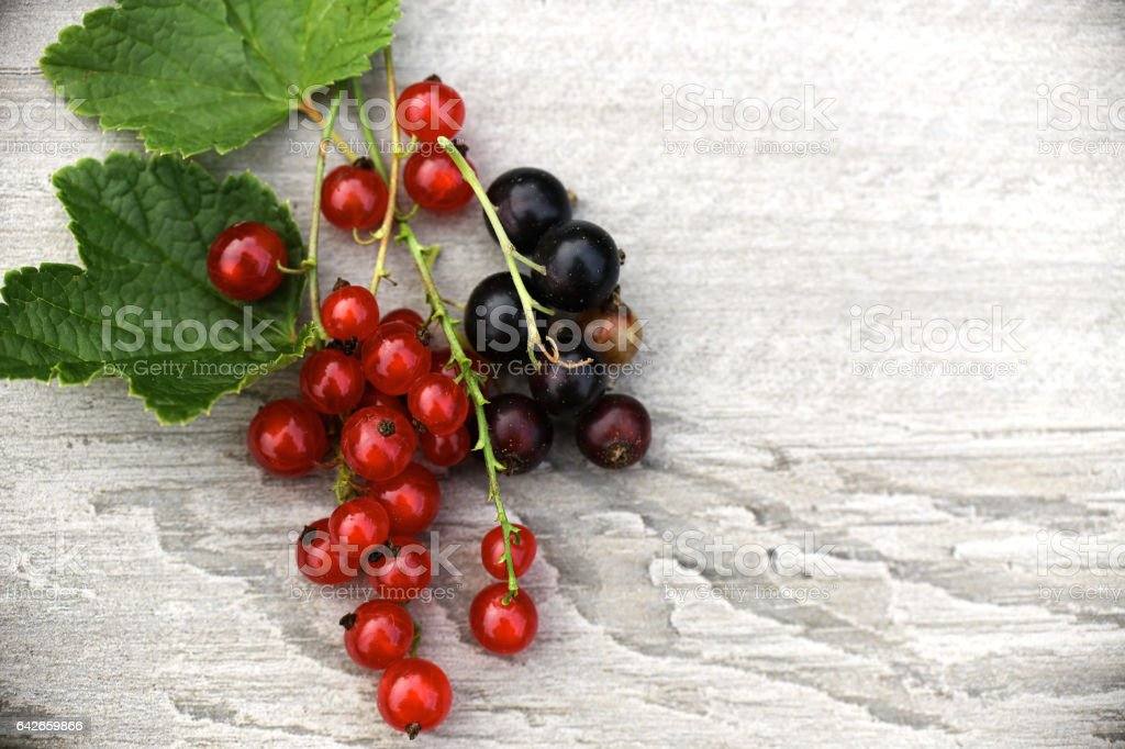 red and black currants stock photo