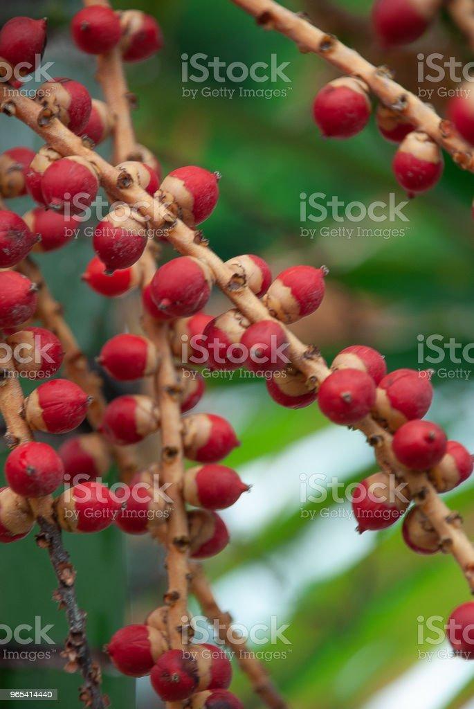 Red and brown berries zbiór zdjęć royalty-free