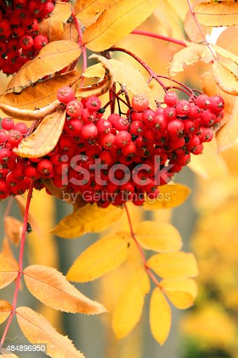 istock Red and Gold 484896950