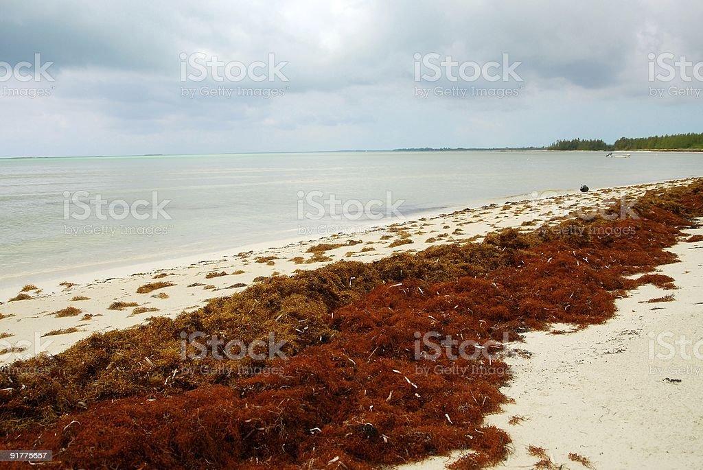 Rojo y oro algas - foto de stock