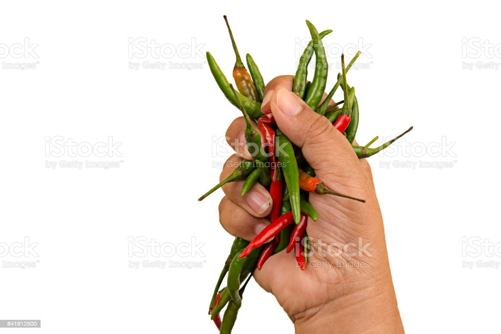 Red and green chilli hand hold on white background stock photo