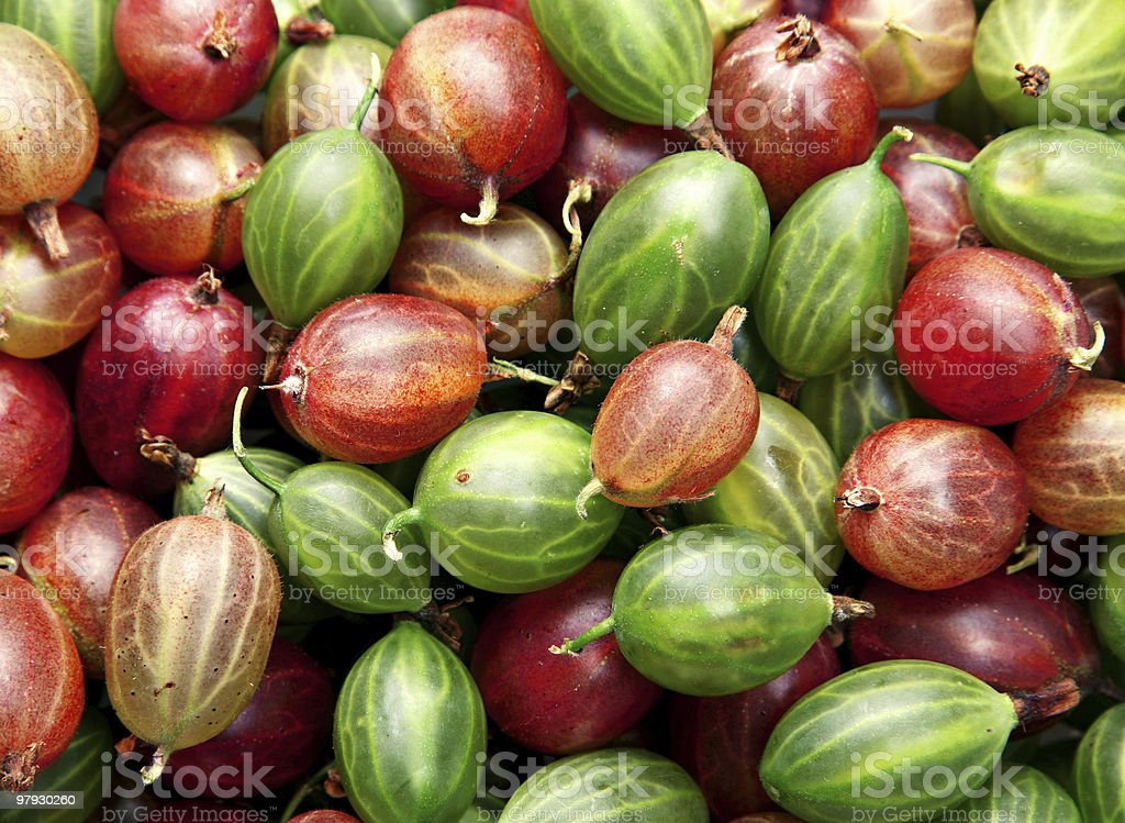 Red and green gooseberry royalty-free stock photo