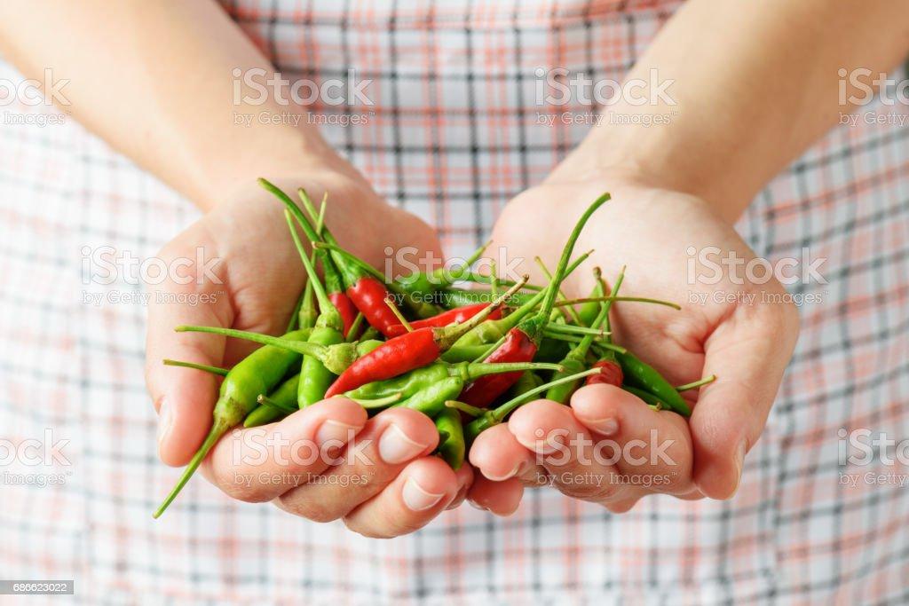 Rouge et vert hot chili peppers dans les mains de la jeune femme photo libre de droits