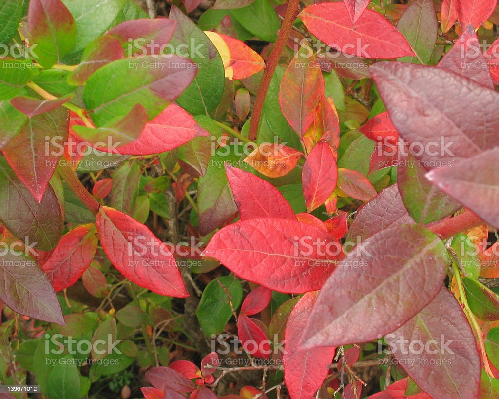 Red and Green Leaves of Fall stock photo