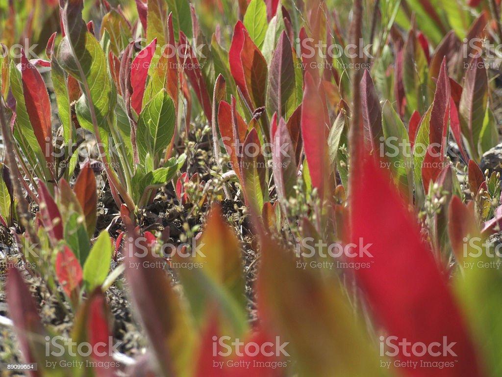 Rojo y verde foto de stock libre de derechos