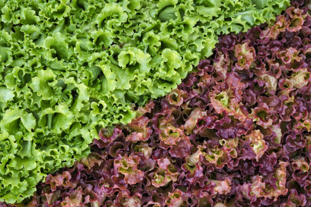 Red And Green Types Of Salad In Market Stall stock photo