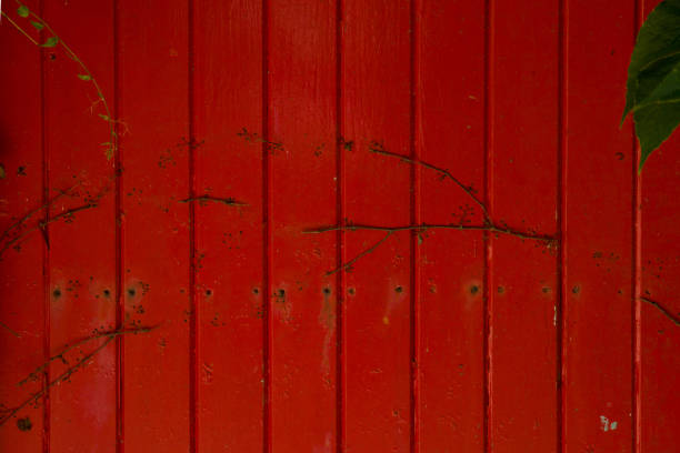 Red and old wooden door with some dried plants for background. stock photo