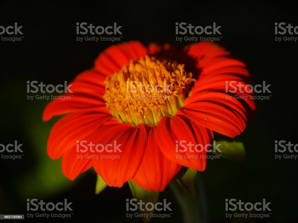 Red and orange beautiful flower central stock photo