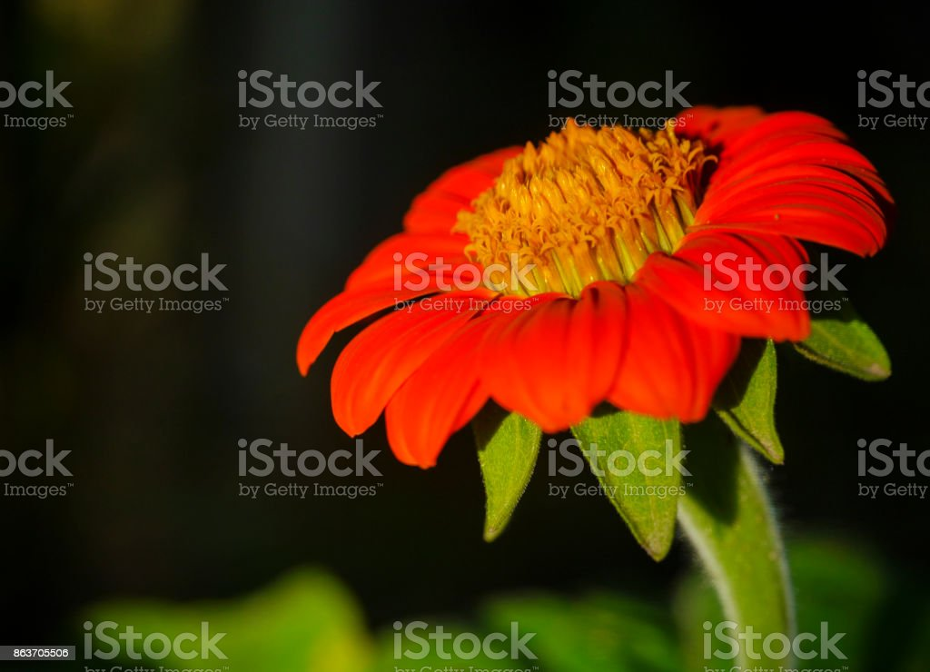 Red and orange flower beautiful stock photo