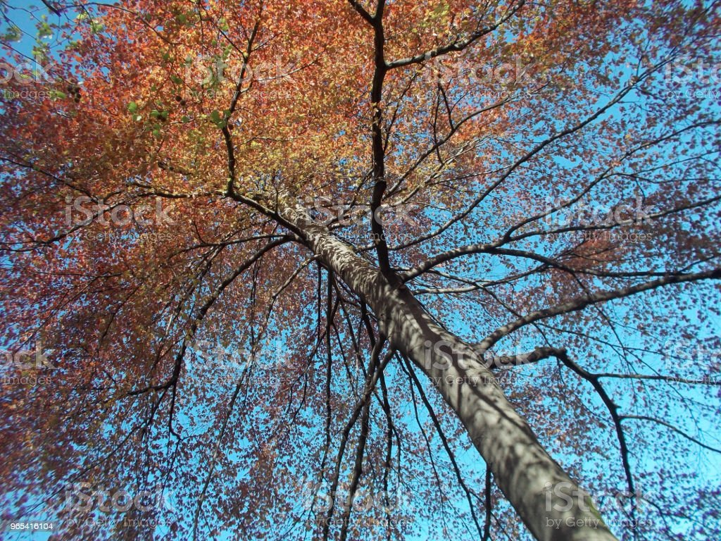 Red and orange leaves on a blue sky royalty-free stock photo