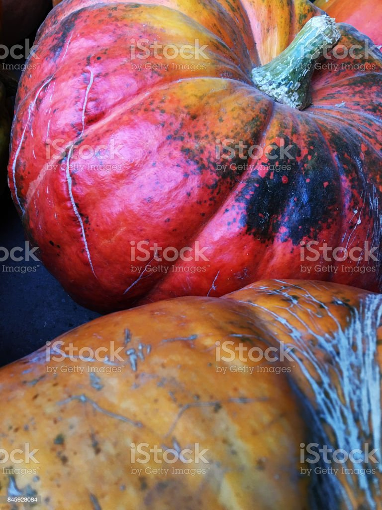 Red and orange pumpkins stock photo
