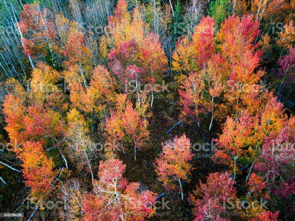 Red and Orange Tone Fall Colors Aspen Trees stock photo