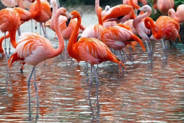 Rojo y rosa Flamingo en un fondo de agua. Copyspace para el texto - foto de stock