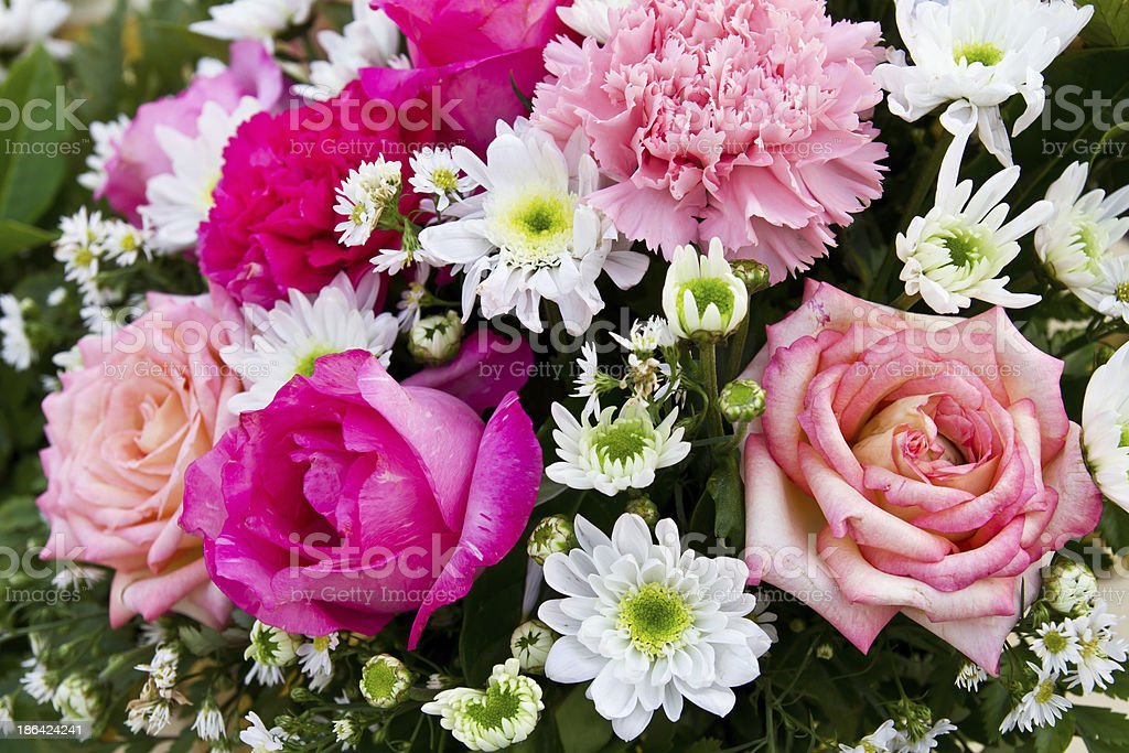 Red and pink roses royalty-free stock photo