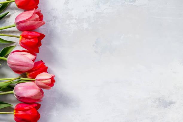 röda och rosa tulpaner flower bakgrund. ovanifrån med kopia utrymme. - maj bildbanksfoton och bilder