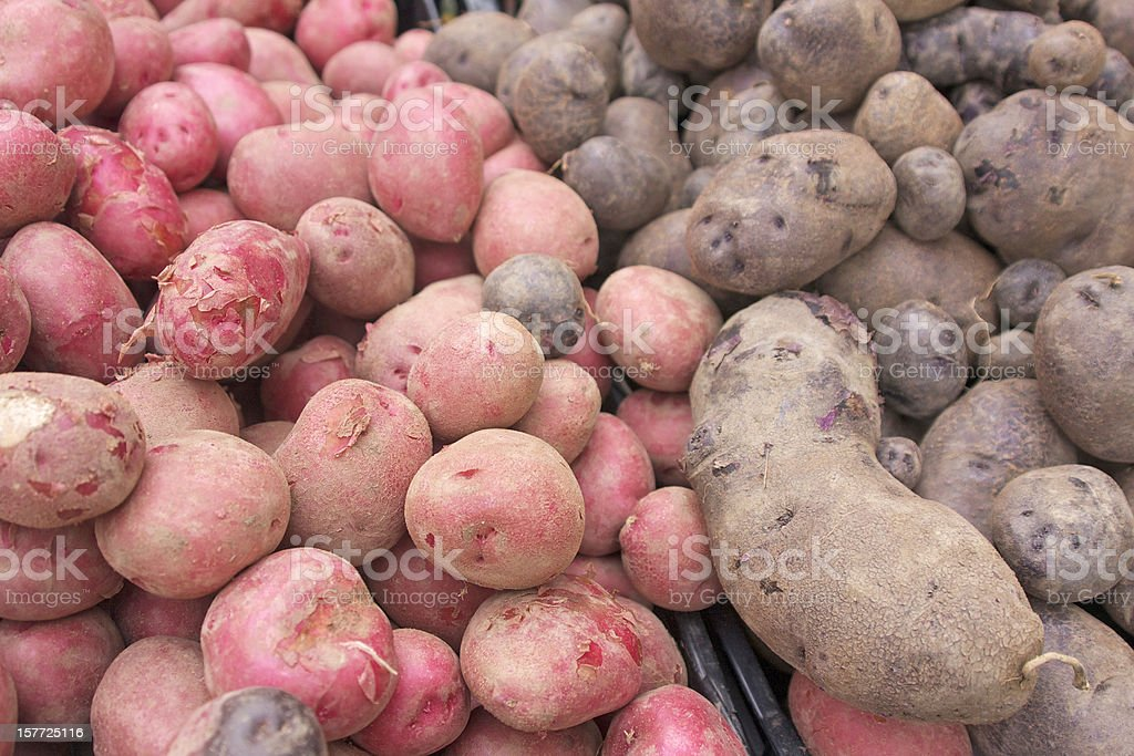 red and purple potatoes royalty-free stock photo
