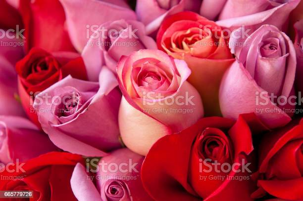 Photo of Red and Rose Roses