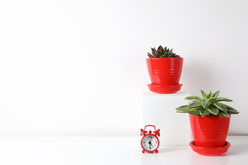 518847146 istock photo Red and white frame poster with plant in pot on table. 955828092